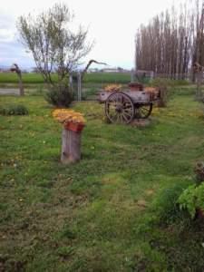 Tronco d'albero con pianta; vecchio carretto con piante; ecosostenibilità