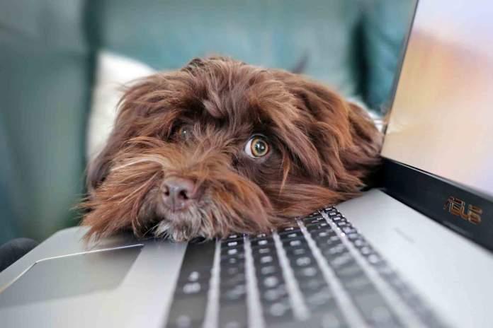 cane gatto ritmi naturali computer