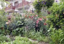 malattie fungine orto fiori