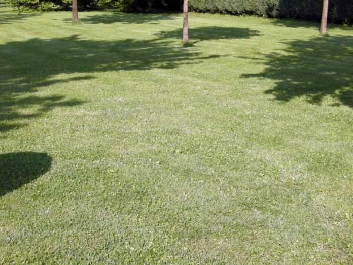 tagliare l'erba