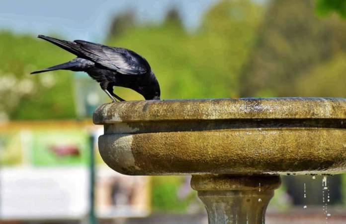 fontana da giardino cornacchia