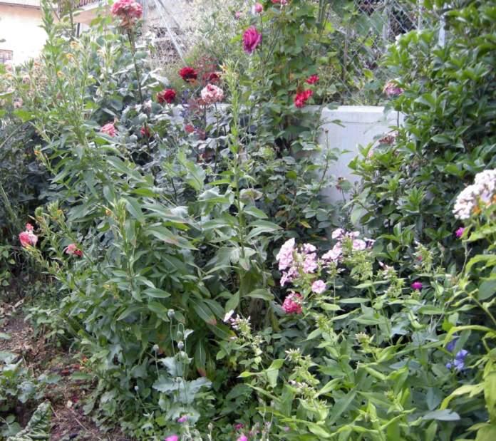 rosai in estate