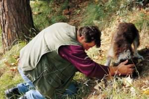 tartufo raccoglie tartufaio cane