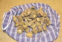 tartufo raccoglie cesto tartufo bianco
