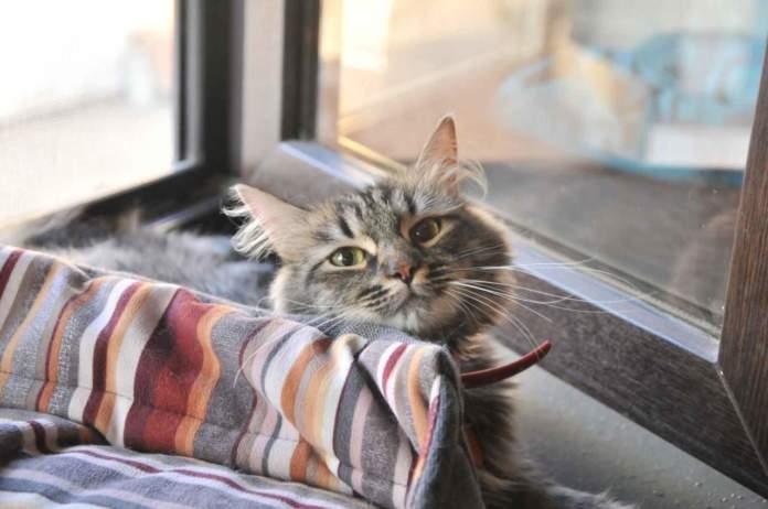 gatto vacanza