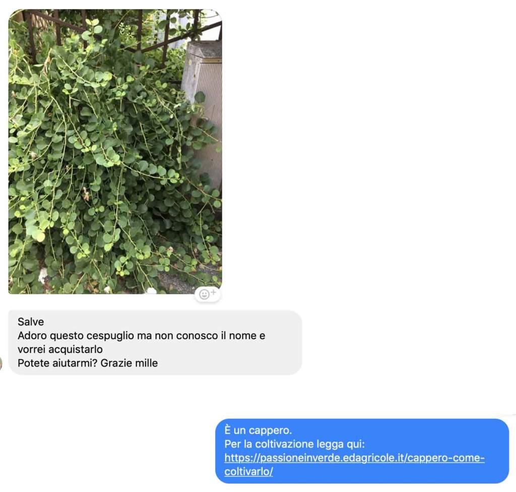 domande giardinaggio