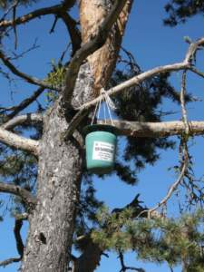 difesa piante trappola processionaria pino
