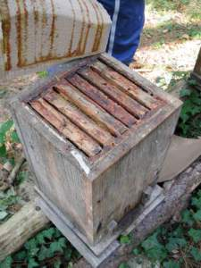 difesa piante propoli telaio arnia
