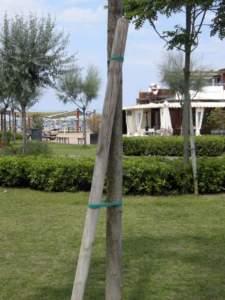 impianti trapianti tutore albero