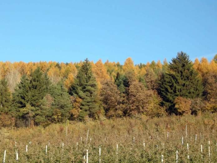 foglie autunno bosco