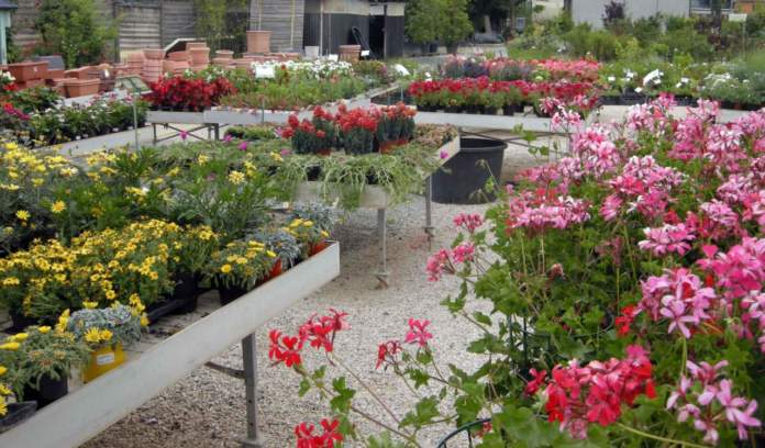 coronavirus garden center