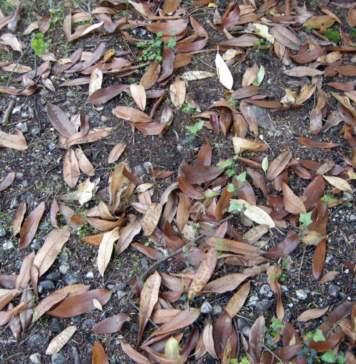 lavori giardino novembre
