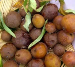 frutti allappano sorbole