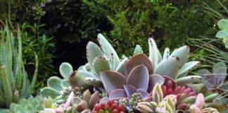 zucca ornamentale succulente