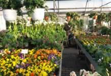 pianta deperisce serra garden center