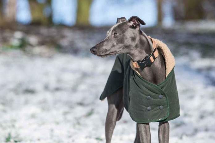 cane cappottino