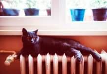gatto termosifoni
