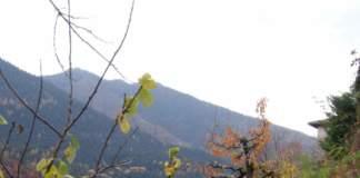 giardino montagna autunno