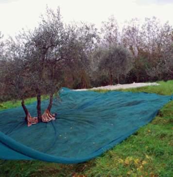 calendario lunare novembre reti raccolta olive