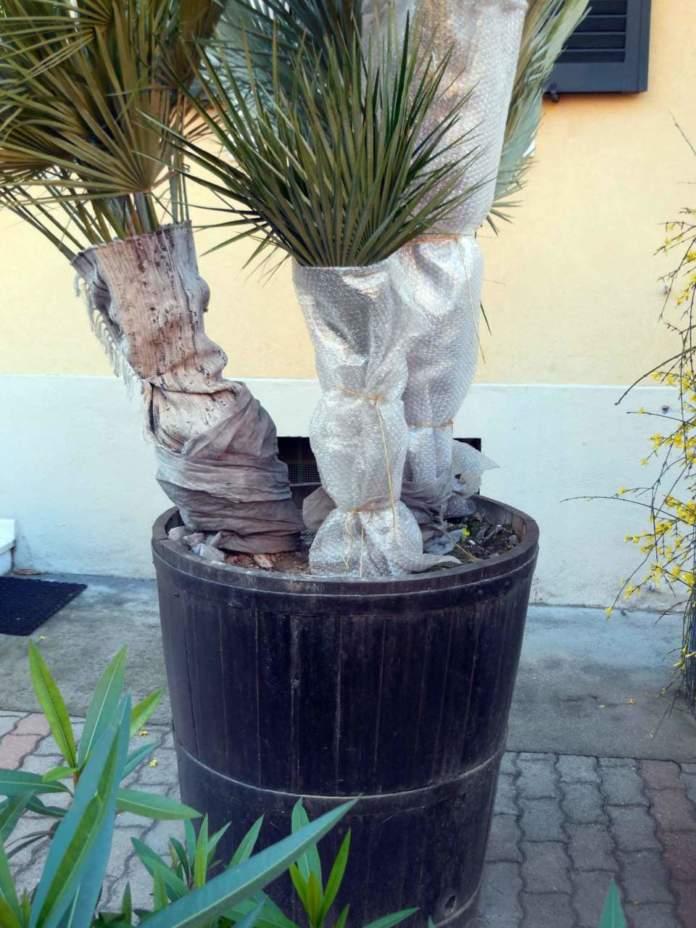 giardino mare inverno protezione palme