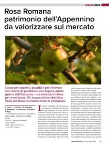 melo rosa romana articolo Frutticoltura 9/20