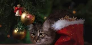 adottare gatto