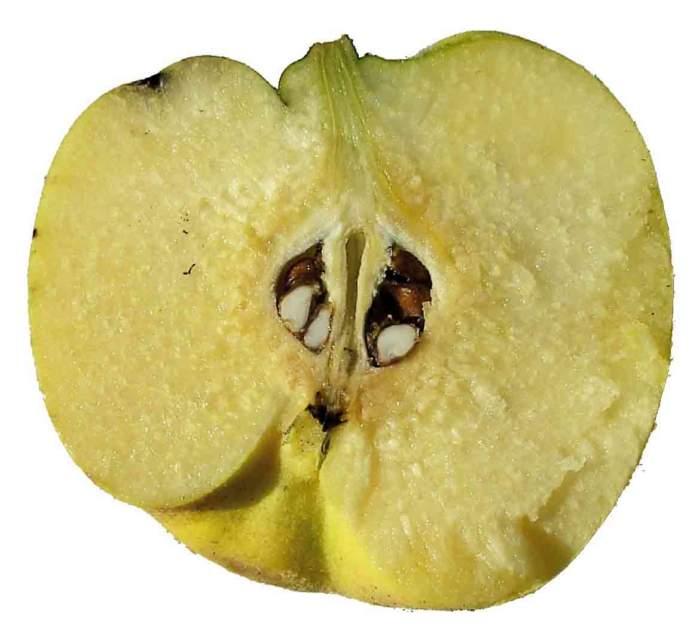 mela mezza