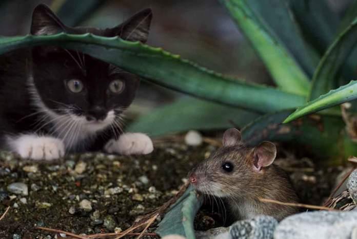 gatto ecosistema