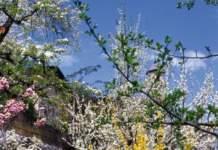 piante zodiaco fiori primavera
