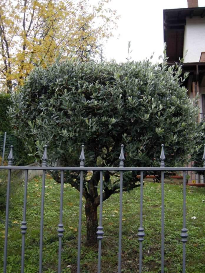 recinzione sicurezza