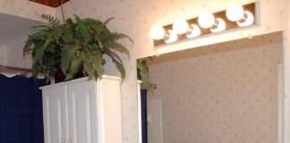 piante bagno felce