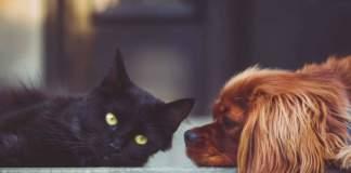 diritti animali cane gatto