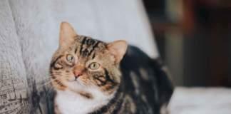 gatto divano unghie