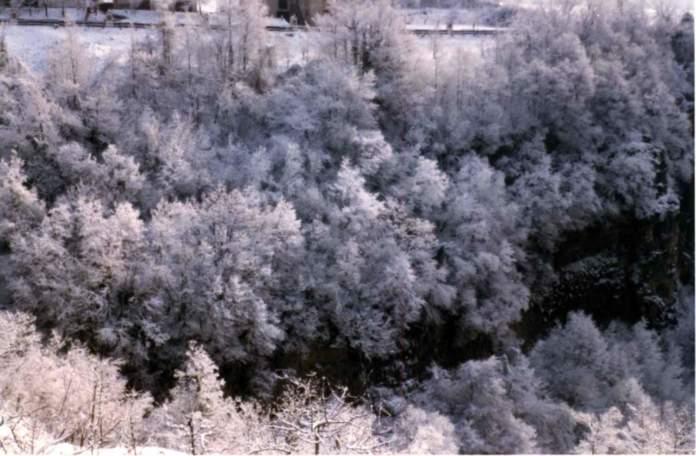 galaverna alberi
