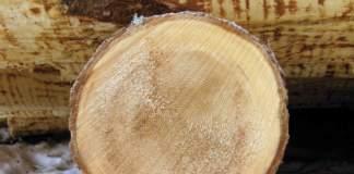 cerchi tronco tagliato
