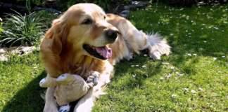 cane giardino