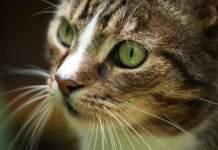 gatto lettiera