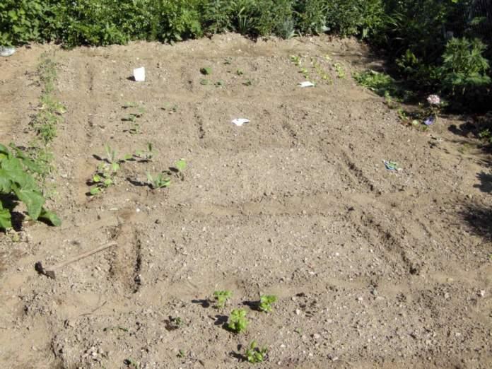 orto semina