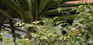 giardino lavori aprile pandorea