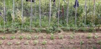 orto lavori maggio