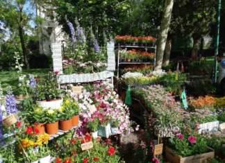 mostre mercato giardinaggio