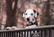 cani terrazzo sicurezza