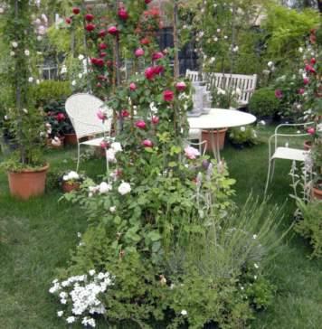 giardino giugno rose