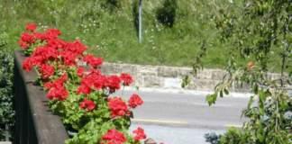 terrazzo luglio gerani