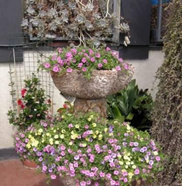 calendario lunare luglio fioriere calibrachoa