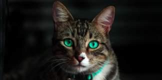gatti guinzaglio
