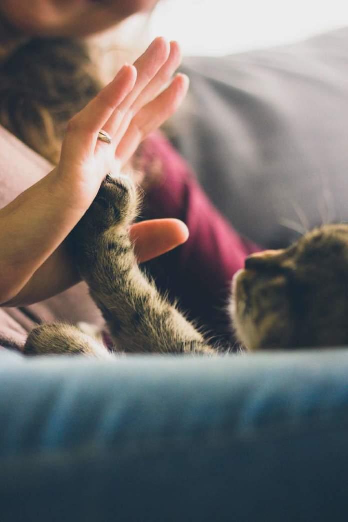 manipolare gatto
