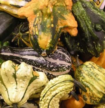 calendario lunare settembre zucche ornamentali