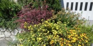 giardinaggio aiuola arbusti erbacee perenni