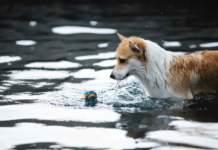 cane acqua
